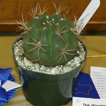 Best Novice Cactus